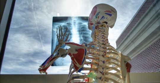 skeleton-2561573_1920