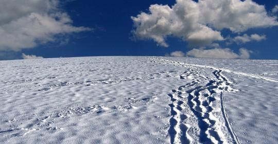 snow-tracks-63988_1920
